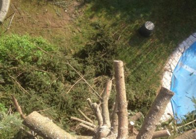 Villefranche sur Saône 69400 abattage et démontage d'un arbre