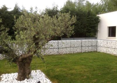 Saint Didier sur Formans 01600 : Un Olivier entouré de galets blancs et gabions