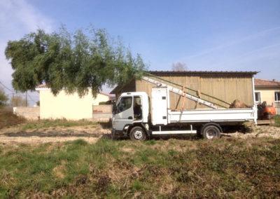 Plantation de bambous géants à Saint Marcel en Dombes 01390 Ain